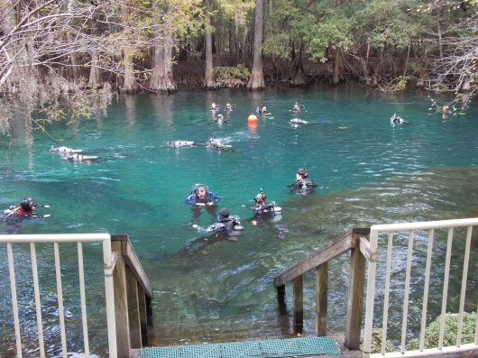 12-Manatee- Springs-FUN-Dive-2013-10-20